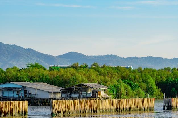 Волновой защитный забор из сухого бамбука в мангровых лесах в море, чтобы избежать береговой эрозии. рыбацкая деревня в мангровых лесах перед горой Premium Фотографии