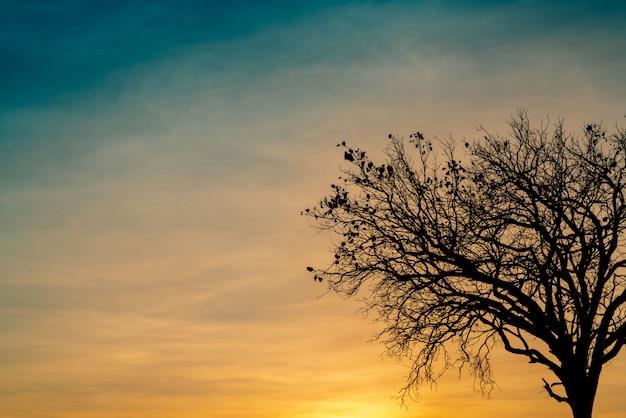 Силуэт мертвого дерева на красивый закат или восход солнца на золотом небе Premium Фотографии