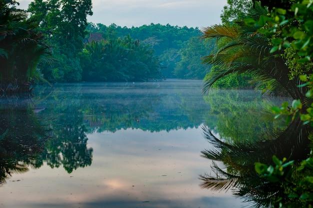 東タイの沿岸のマングローブ生態の美しい景色 Premium写真
