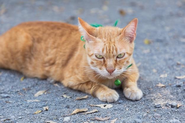 かわいい飼い猫が根拠に横になっています。タイのオレンジと白猫。 Premium写真