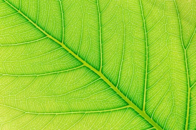 背後にある光と緑の葉のパターンテクスチャ背景。 Premium写真