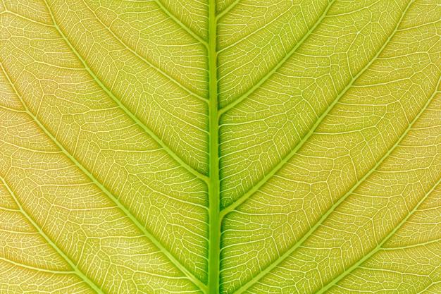 Зеленая предпосылка текстуры картины лист с светом позади. Premium Фотографии