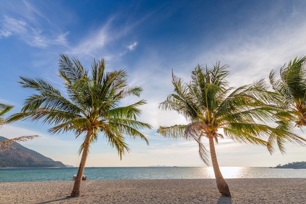 白い砂浜とタイ南部の青い空にヤシの木 Premium写真