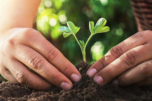 農家は自然の中で日光と小さな木を植えます。農業の概念 Premium写真