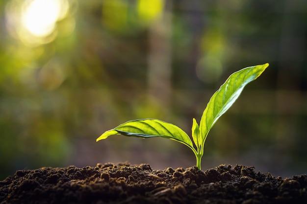 日光の下で成長している小さな木 Premium写真