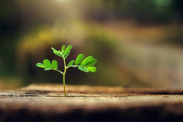 朝の光で育つ小さな植物 Premium写真