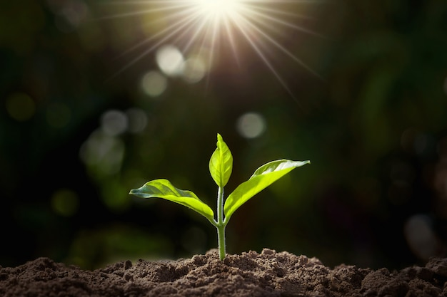 日光の庭で成長している小さな植物 Premium写真