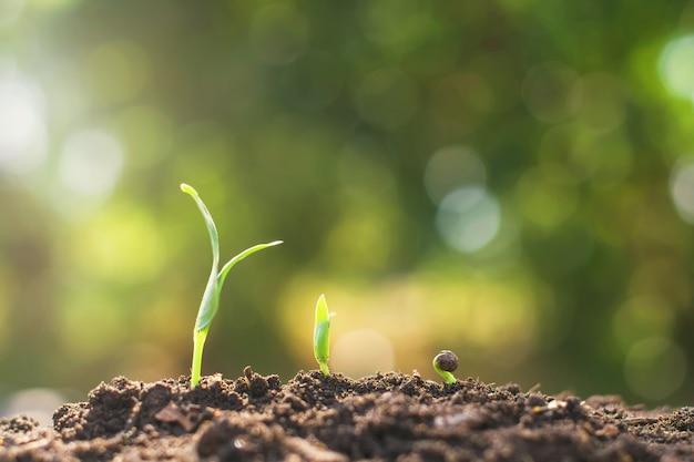 若い植物の成長ステップ庭の農業の概念 Premium写真