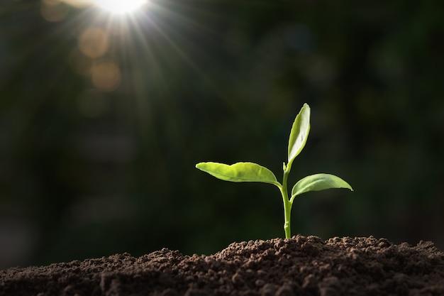日光と自然に成長している緑の植物 Premium写真