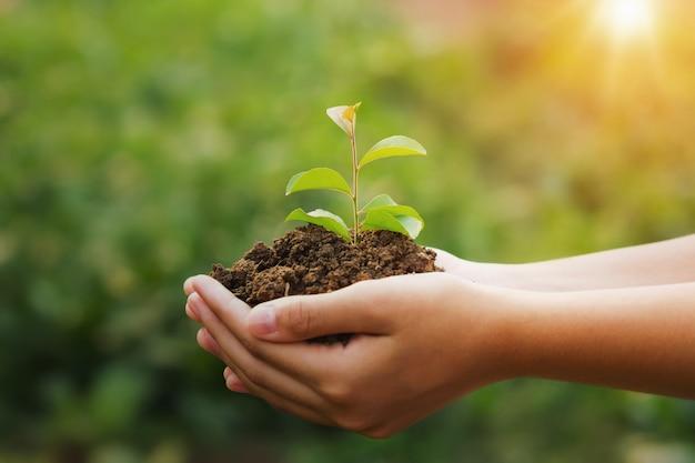 日光と若い植物と緑の背景を持っている手。エココンセプトアースデー Premium写真