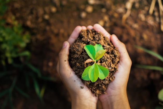成長している若い植物を持っているトップビュー手。コンセプトエコと地球の日 Premium写真