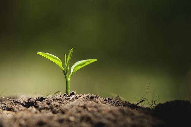 自然の中で太陽の光で成長している若い植物 Premium写真