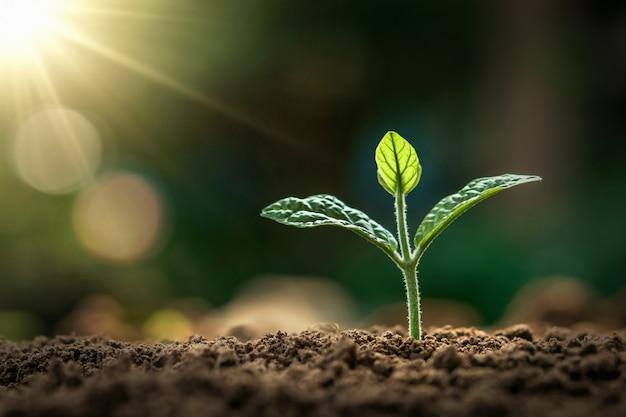 庭で朝の光で育つ小さな植物。コンセプトアースデー Premium写真