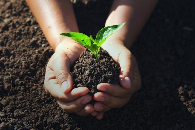 Рука молодое дерево для посадки. Premium Фотографии