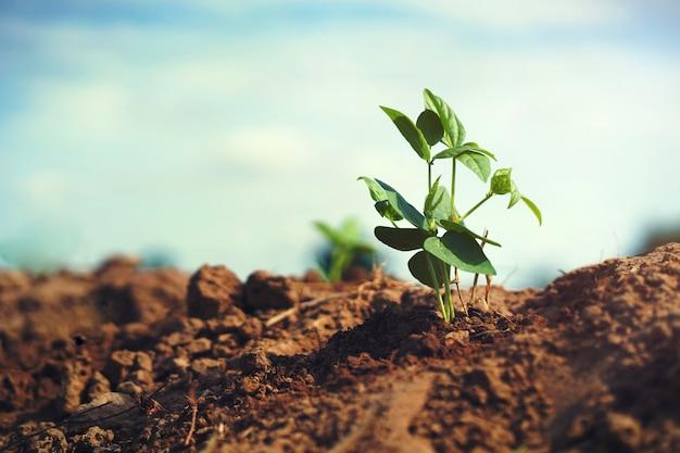 太陽の光と庭の若い豆の木 Premium写真