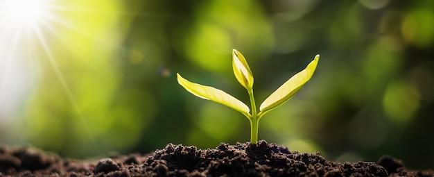 日の出と成長しているパノラマの小さな木 Premium写真