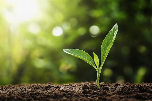 自然の中で太陽の光で成長している若い植物。農業と地球の日の概念 Premium写真