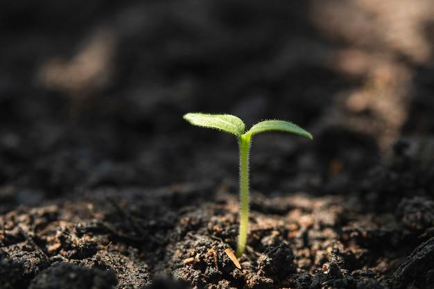 Конопля молодое растение палочки от конопли
