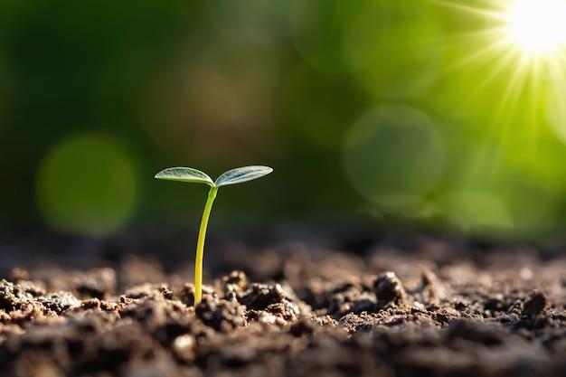 Молодое растение растет с восходом солнца. зеленый день и мир день концепция Premium Фотографии