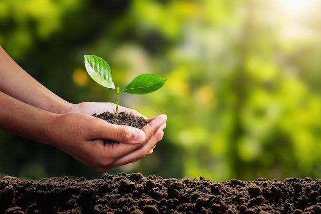 Молодое растение растет под рукой. концепция эко среды Premium Фотографии