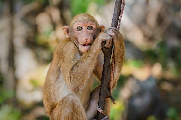 Портрет обезьяны на дереве в природе Premium Фотографии