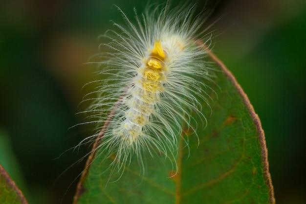 葉の上の白い虫のクローズアップショット Premium写真