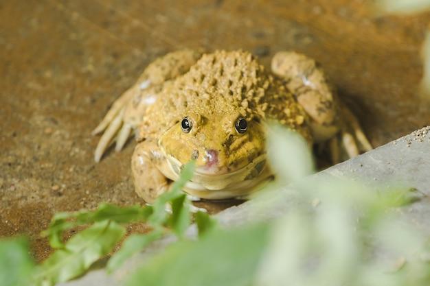 両生類の動物である池の地面にカエル Premium写真