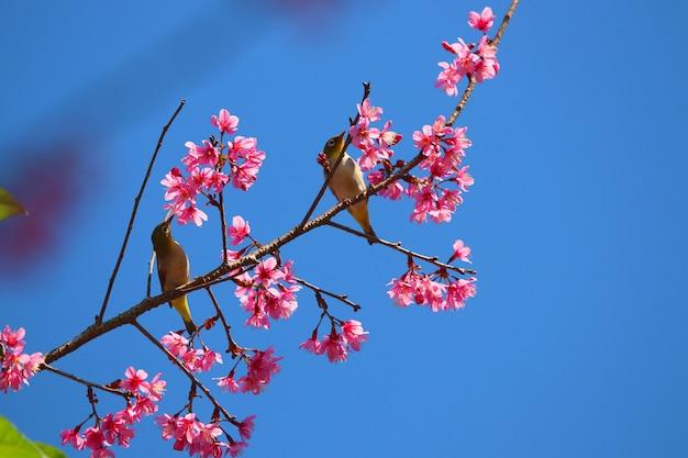 Бюльбюль милая птица с гималайским цветком красочный цветок на фоне голубого неба Premium Фотографии
