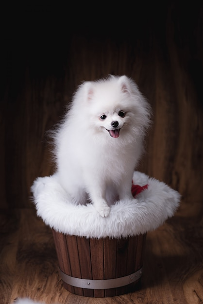 木製のバケツに座っているかわいい子犬ポメラニアン犬 Premium写真