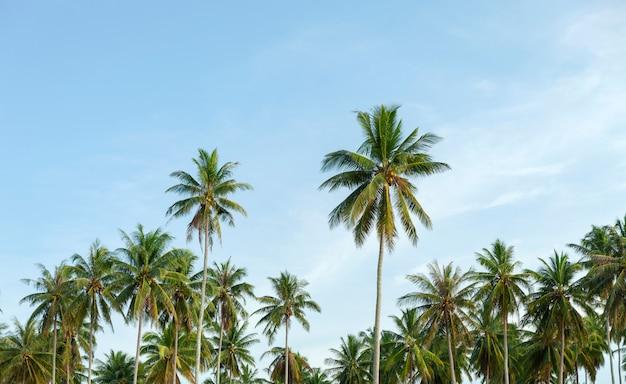 澄んだ青い空の風景の背景を持つ熱帯の島のヤシの木の行 Premium写真