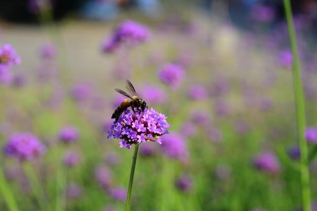 Фиолетовые цветы и пчелы Premium Фотографии