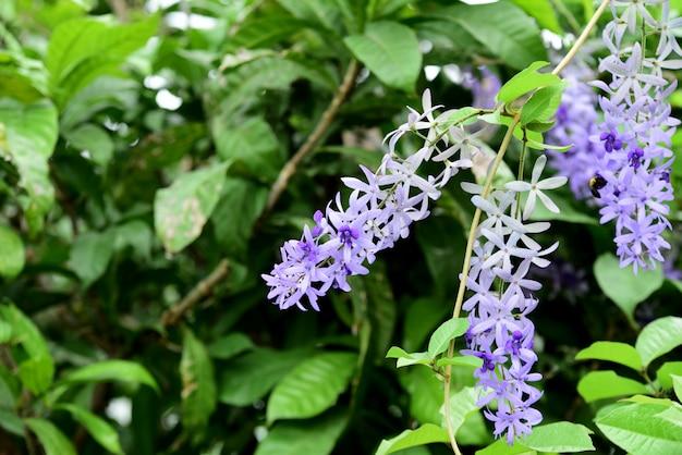 紫色の花と蜂 Premium写真