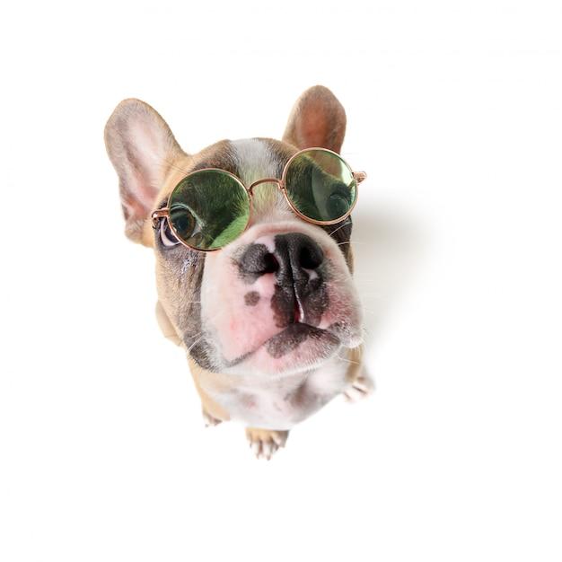 Симпатичные французский бульдог носить солнцезащитные очки изолированы Premium Фотографии
