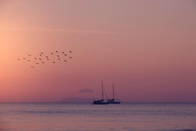 夏の背景の鳥と海のヨット。 Premium写真