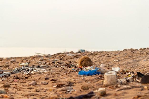 プラスチック破片地上のゴミくず砂浜海を汚染する Premium写真