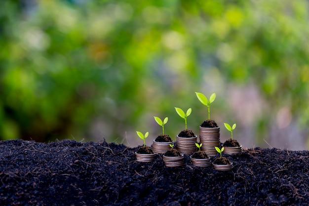貯蓄成長コンセプト、地面から発芽する植物 Premium写真