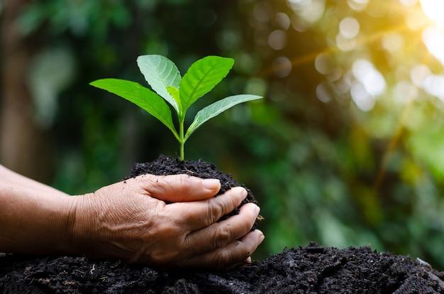 苗木を育てる木の手の中に。ボケ味の緑の背景 Premium写真