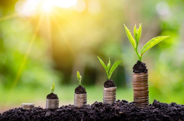 お金の成長お金を節約する。ビジネスの成長の概念を示す上の木のコイン Premium写真