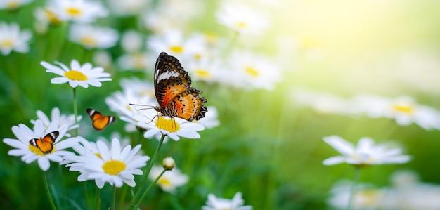 黄色のオレンジ色の蝶は緑の芝生のフィールドで白ピンクの花です Premium写真