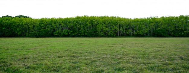 Панорама дерево белый фон баннер Premium Фотографии
