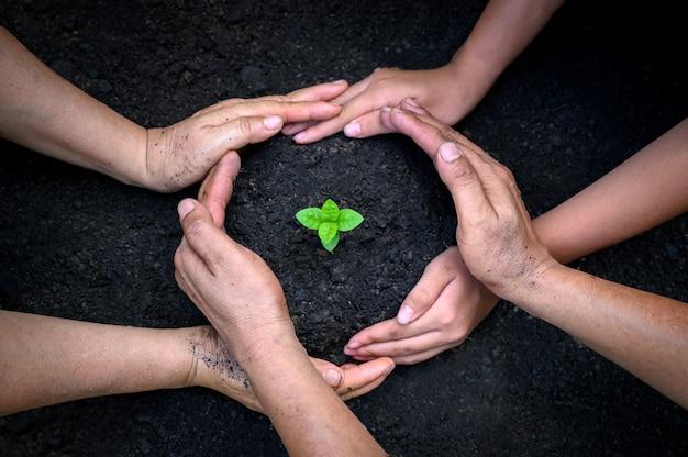 環境アースデー苗木を育てる木の手の中。自然フィールドの草の森林保全の概念にツリーを持っている女性の手 Premium写真