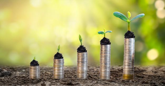 お金の成長お金を節約します。示された概念に対する上位ツリーのコイン Premium写真