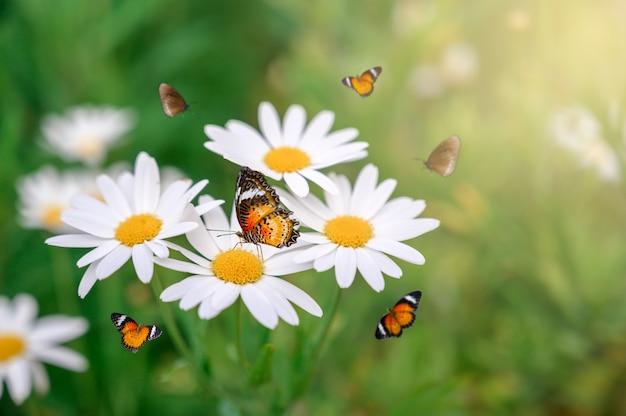 黄色のオレンジ色の蝶は、緑の芝生の白いピンクの花の上にあります Premium写真