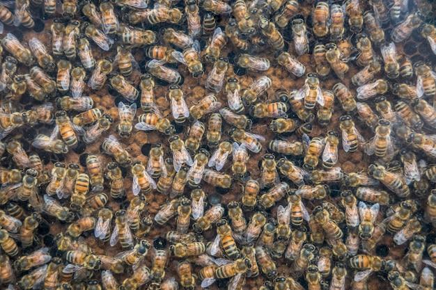 蜂蜜細胞、ハニカムの背景に蜂のクローズアップに働く蜂。 Premium写真