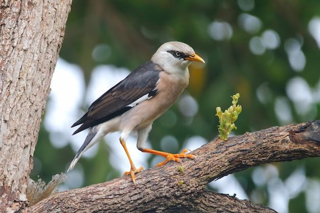 タイ王国の美しい鳥 Premium写真