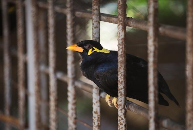 ケージ内のコモンヒルミーナの鳥 Premium写真