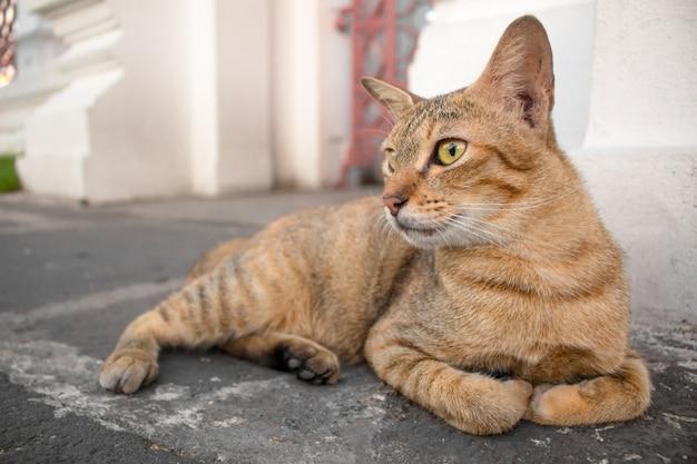 黄色い目と三日月形の黒い目の茶色の猫が見ています。 Premium写真