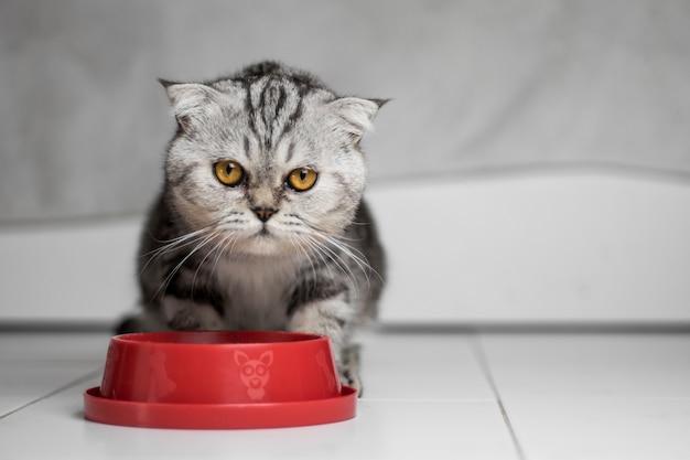 フードトレイの赤で食べ物を食べる猫。 Premium写真