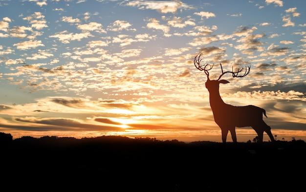 夕日と山の上に鹿のシルエット Premium写真