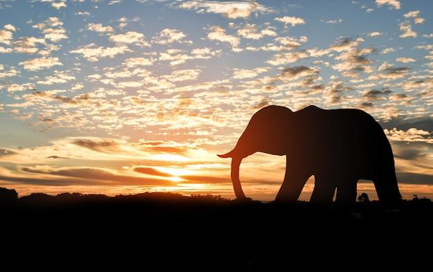 夕暮れ時の山の上に象のシルエット Premium写真